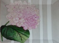 HORTENSIA-ROSE